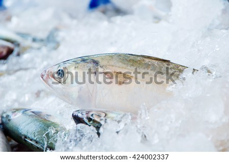 FRESH MACKEREL FISH ON ICE AT FRESH MARKET, SELECTIVE FOCUS AND BLURRY BACKGROUND