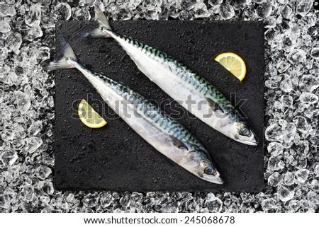 Fresh mackerel fish on ice on a black stone table top view - stock photo