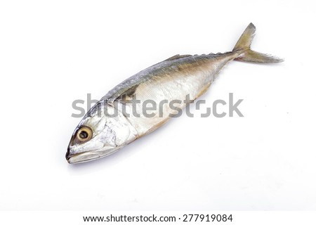 Fresh mackerel fish on the white background - stock photo