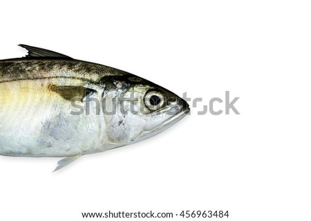 Fresh Mackerel fish spread fin isolated on white background.