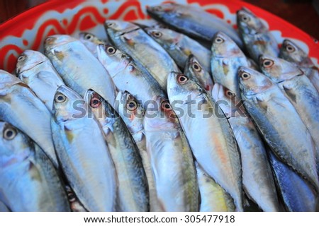 fresh mackerel fishes in local fish market  - stock photo