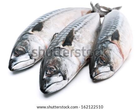 Fresh mackerel fishes isolated on white - stock photo