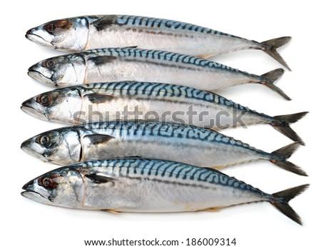 Fresh mackerel fishes scomber isolated on white - stock photo