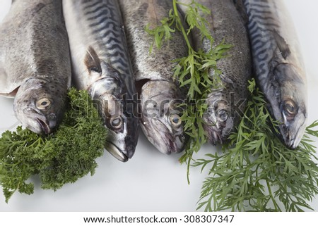 Fresh mackerel on wood with vegetables