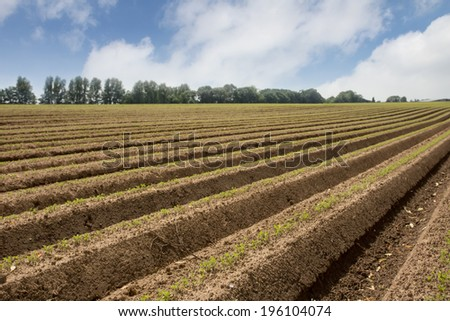 fresh made agricultural field - stock photo