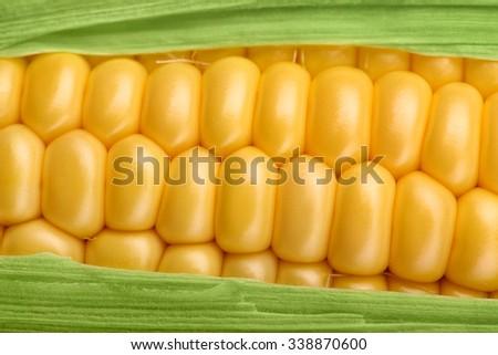Fresh maize natural organic corn cob closeup, horizontal - stock photo