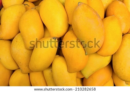 Fresh mango fruit background. - stock photo