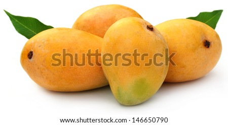 Fresh Mangoes with green leaves - stock photo