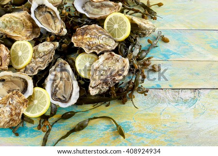 Fresh marine oyster and seaweed still life with shucked opened raw oysters and sliced lemon on a bed of seaweed on rustic weathered blue wooden boards with copy space - stock photo