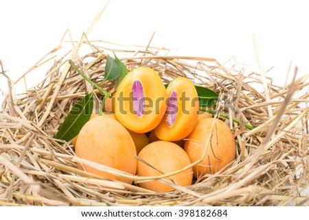 Fresh Mayongchid Maprang Marian Plum and Plum Mango on grass nest on white background