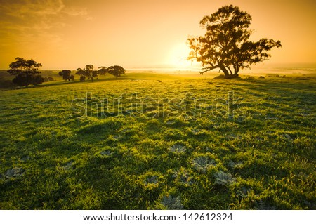 Fresh meadow sunrise in the Clare Valley - stock photo