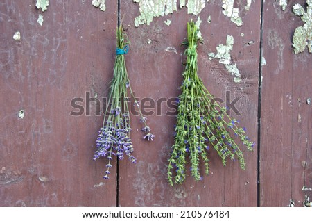 fresh medical herbs lavender and hyssop (Hyssopus officinalis) on old wooden farm barn wall - stock photo