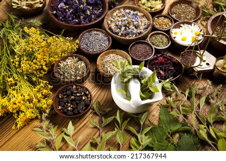 Fresh medicinal herbs - stock photo