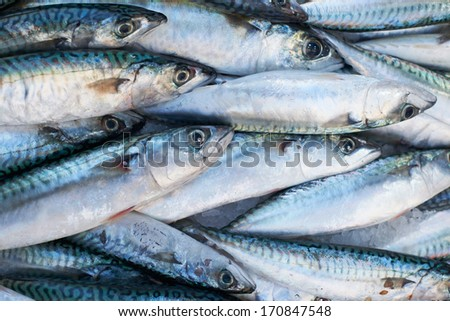 Fresh mediterranean mackerel  fish for sale on market of Marseille, France - stock photo