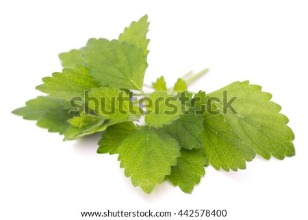 fresh melissa on a white background - stock photo