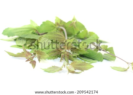 fresh Mexican dream herb on a light background - stock photo