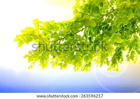 fresh mild early growth green leaves and branches on morning sunrise environment nature love earth concept for design and decoration