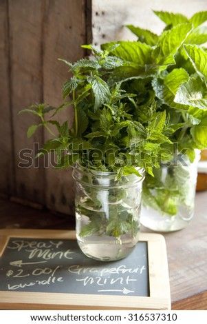 Fresh mint for sale - stock photo