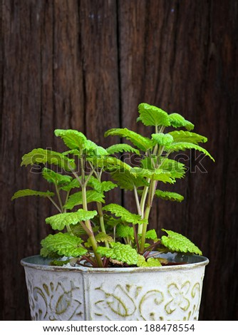 Fresh mint herb in a tin pot on dark rough wooden background - stock photo