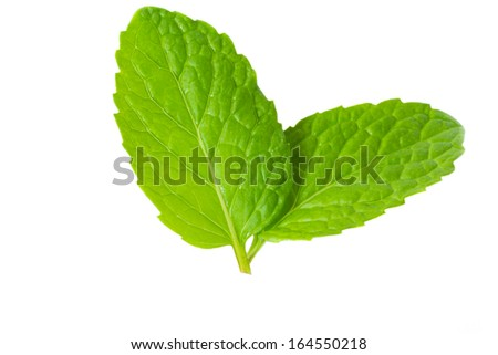 Fresh mint herb on isolated white background