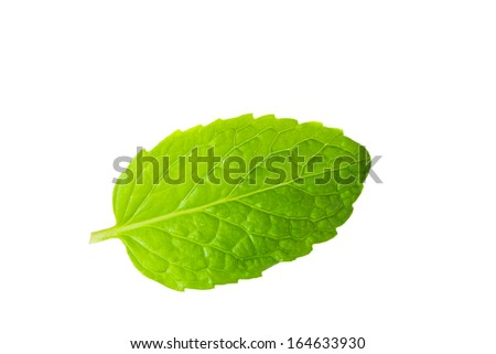 Fresh mint herb on white