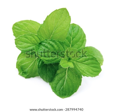 Fresh mint herbs close up on white backgrounds.