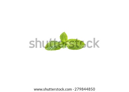Fresh mint isolated on a white - stock photo