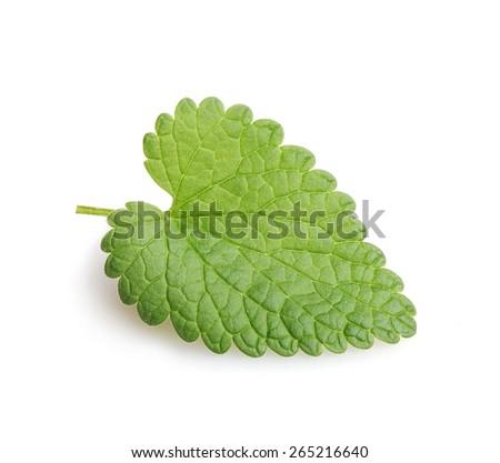 Fresh mint leaf. Isolated on white background - stock photo