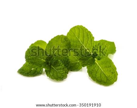 Fresh mint leaf on white background - stock photo