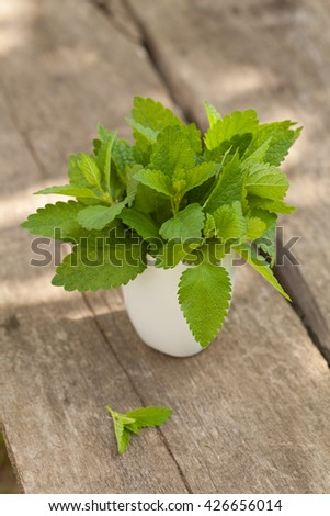 Fresh mint leaves in white mug outdoor