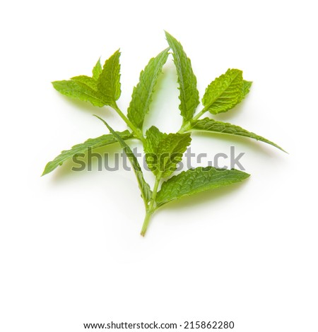 Fresh mint leaves isolated on a white studio background. - stock photo