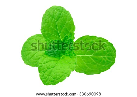 Fresh mint leaves isolated on white background - stock photo