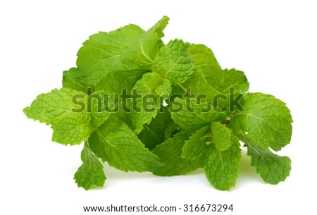 fresh mint leaves on a white background - stock photo