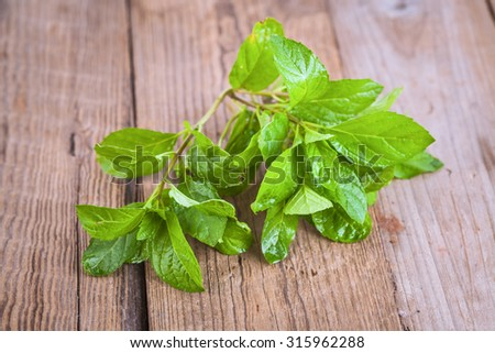 fresh mint leaves on wooden table - stock photo