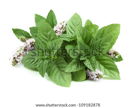 Fresh mint on a white background - stock photo