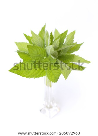 fresh mint on a white background - stock photo
