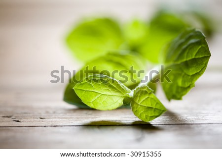 Fresh mint on wooden table - stock photo