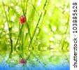 Fresh morning dew on a grass and little ladybug over a garden pond, natural background - close up with shallow DOF. - stock photo