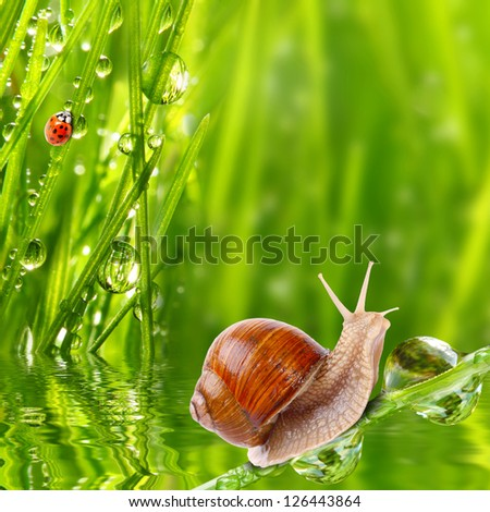 Fresh morning dew on a spring grass and little animals, natural background - close up with shallow DOF. - stock photo