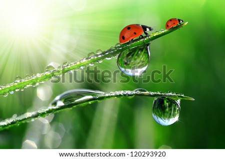 Fresh morning dew on a spring grass and little ladybug - stock photo