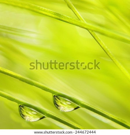 Fresh morning dew on a spring grass in early morning. Natural background. Close up with shallow DOF. - stock photo
