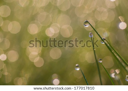 Fresh morning dew on spring grass, close up with shallow DOF. - stock photo