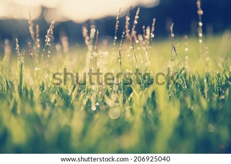 Fresh morning dew on spring grass, natural background with retro filter effect - stock photo