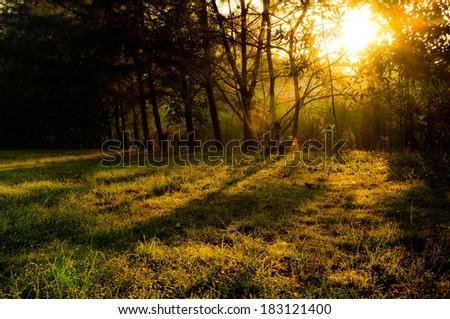 Fresh morning in spring grass - stock photo