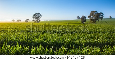 Fresh morning in the Clare Valley, South Australia - stock photo