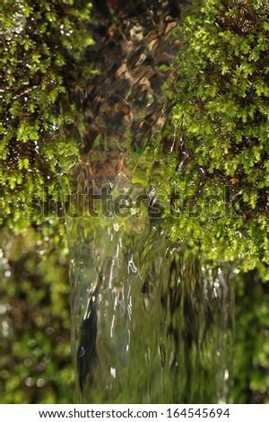 Fresh moss macro in green nature - stock photo