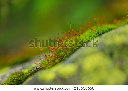 Fresh moss sprouts and blooms in the mountains