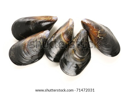 fresh mussel isolated on white background.