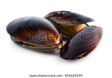 Fresh mussels isolated on white background - stock photo