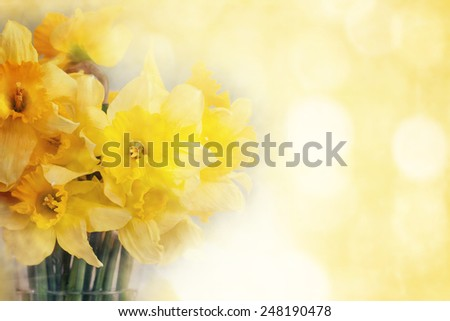 Fresh narcissus, greeting card for mothers day, Valentines Day - stock photo